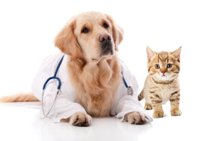 Laboratory Tests Philadelphia Vet