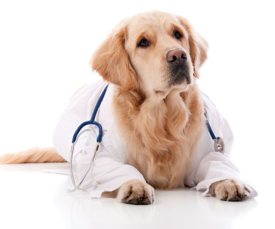 Philadelphia Vet Laboratory Tests