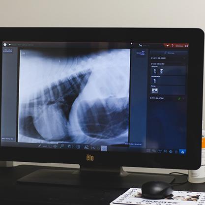 dog radiology Philadelphia