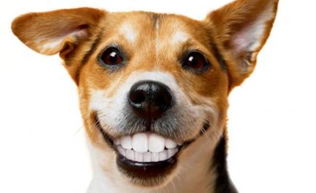 Pet dentistry Philadelphia PA